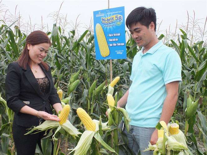 Bắp ngô ngọt sang Hàn Quốc giá 180 nghìn đồng - Ảnh 1.