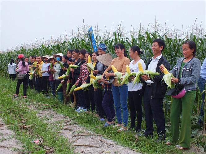 Bắp ngô ngọt sang Hàn Quốc giá 180 nghìn đồng - Ảnh 4.