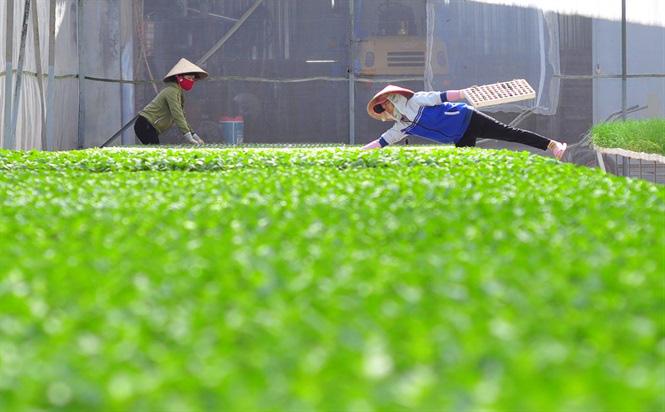 Vườm ươm hữu cơ tiền tỷ của nông dân xứ rau - Ảnh 1.