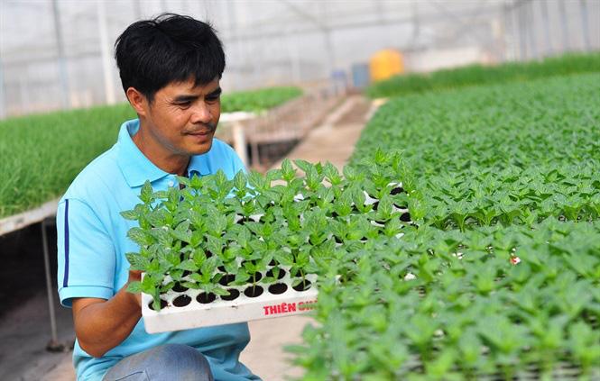 Vườm ươm hữu cơ tiền tỷ của nông dân xứ rau - Ảnh 10.