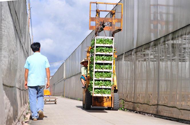Vườm ươm hữu cơ tiền tỷ của nông dân xứ rau - Ảnh 11.