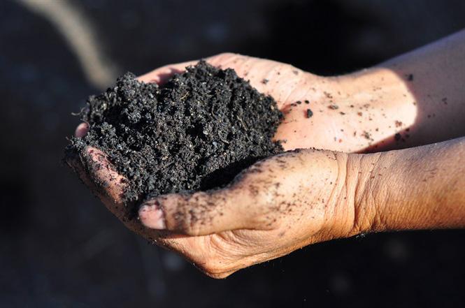 Vườm ươm hữu cơ tiền tỷ của nông dân xứ rau - Ảnh 3.