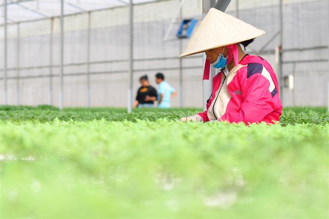 Vườm ươm hữu cơ tiền tỷ của nông dân xứ rau - Ảnh 9.