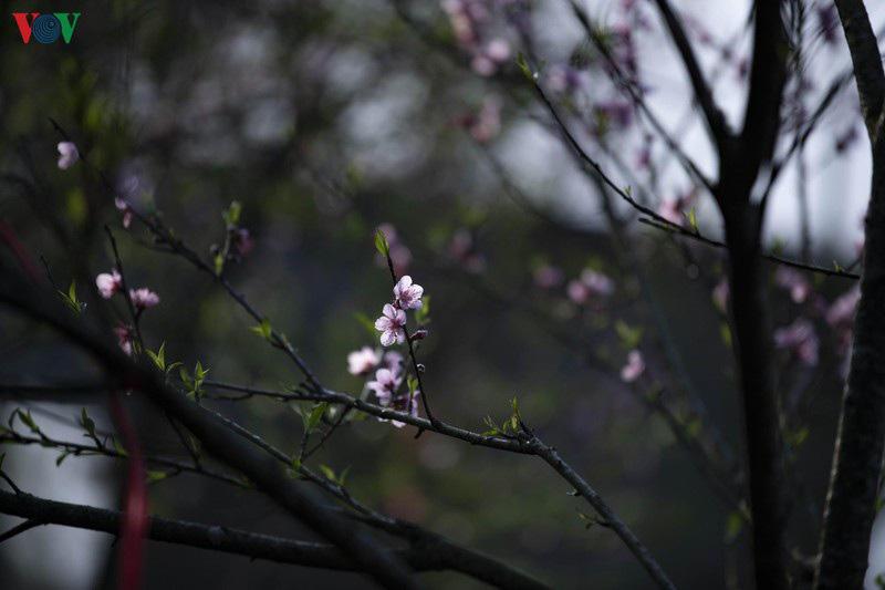 Sa Pa đẹp ngất ngây khi mùa xuân về - Ảnh 3.