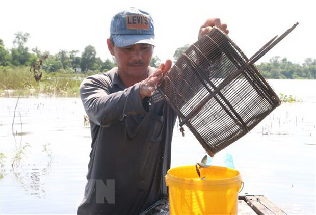 Trải nghiệm một ngày mùa nước nổi cùng ngư dân Đồng Tháp - Ảnh 2.