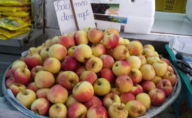 Thực hư về giống táo đá Hà Giang - Ảnh 1.