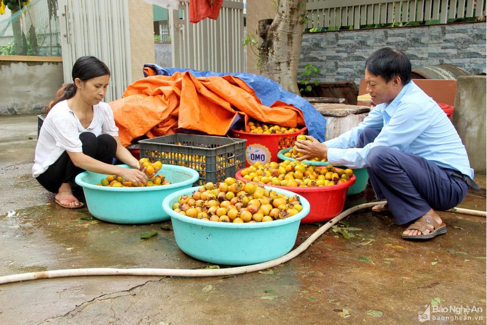 Thủ phủ trồng hồng xứ Nghệ giảm 70% sản lượng, nông dân buồn thỉu buồn thiu - Ảnh 5.