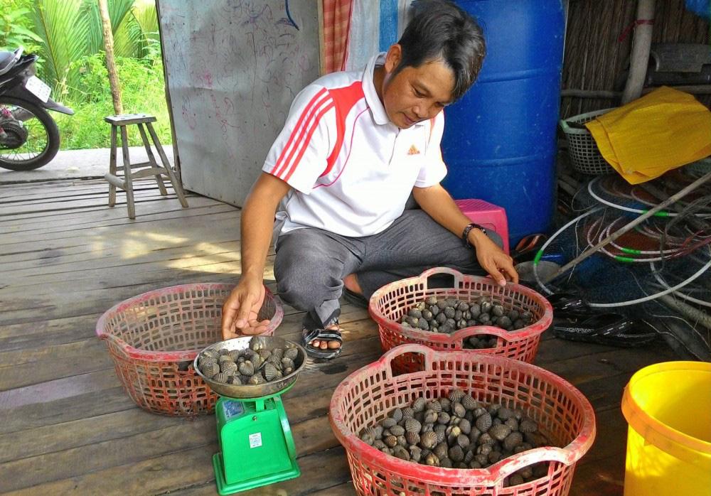 Cà Mau: Thả ốc hương đặc sản vào vuông nuôi tôm sú, sau 8 tháng nông dân bất ngờ vì 1 vốn 4 lời - Ảnh 1.