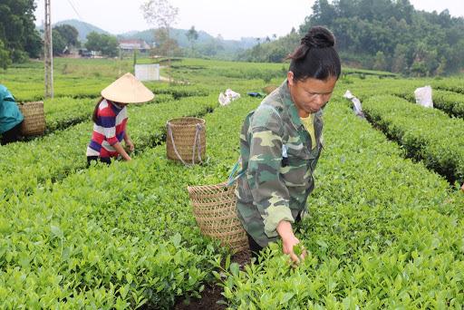 Bắc Giang:  Chủ động chuyển đổi cơ cấu nông nghiệp, làm giàu - Ảnh 1.