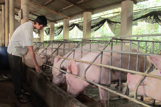 Thịt lợn giảm giá mạnh, mấy triệu hộ dân lại lo lắng - Ảnh 2.