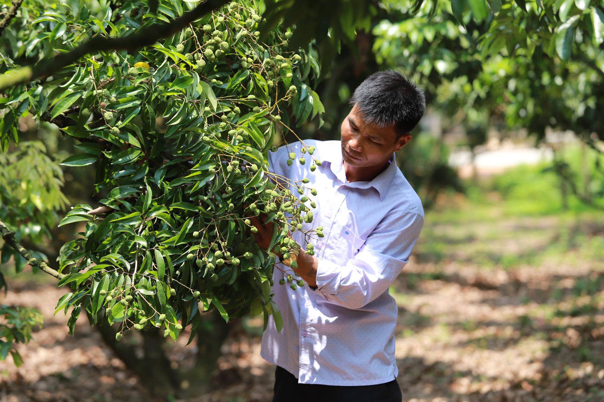Bắc Giang:  Chủ động chuyển đổi cơ cấu nông nghiệp, làm giàu - Ảnh 2.