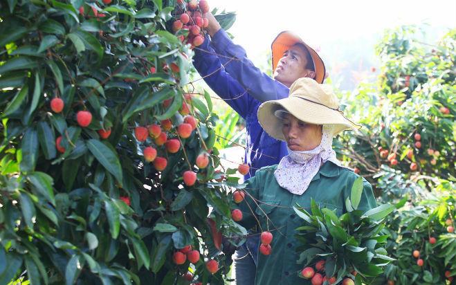 Bắc Giang: Chuyển đổi cơ cấu nông nghiệp đúng hướng, nông dân làm giàu, xuất hiện nhiều tỷ phú