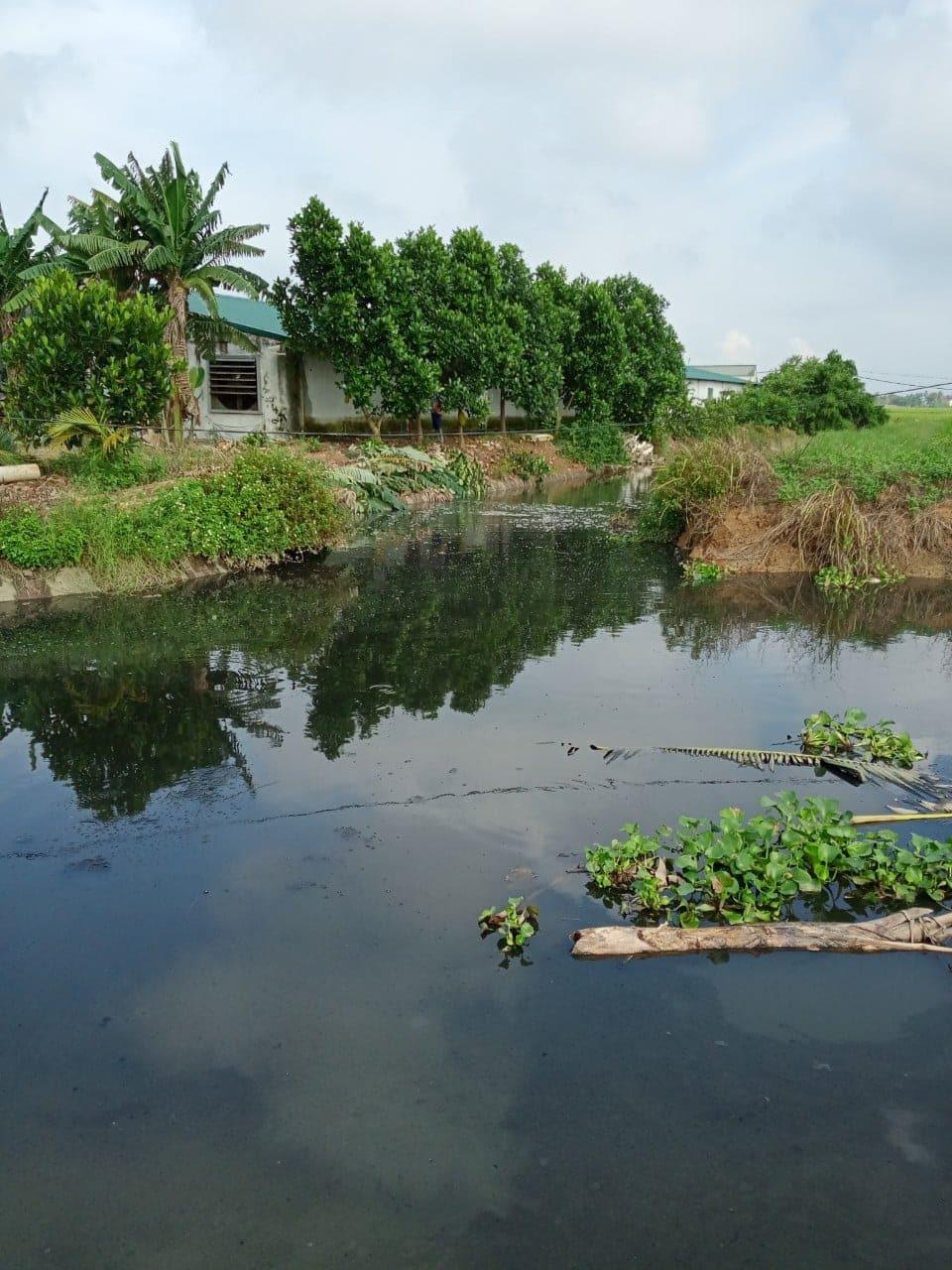 Hải Phòng: 8 trại lợn thi nhau xả thải, phân đặc kín dòng kênh - Ảnh 5.