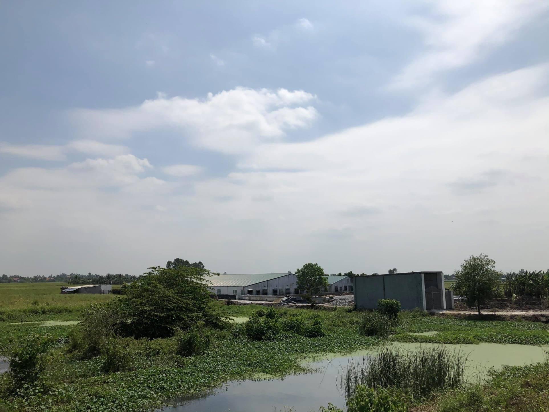 Hải Phòng: 8 trại lợn thi nhau xả thải, phân đặc kín dòng kênh - Ảnh 1.