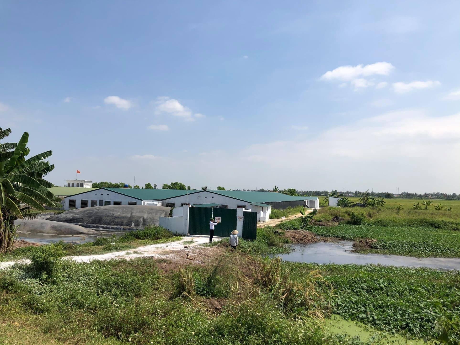 Hải Phòng: 8 trại lợn thi nhau xả thải, phân đặc kín dòng kênh - Ảnh 2.
