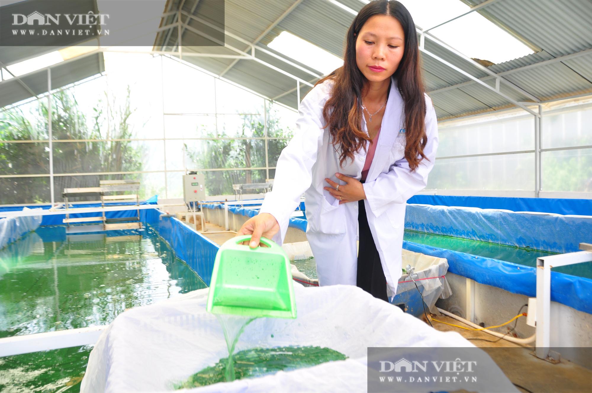 Nữ thạc sĩ đưa tảo xoắn ngoại về Tây Nguyên nuôi trồng - Ảnh 1.