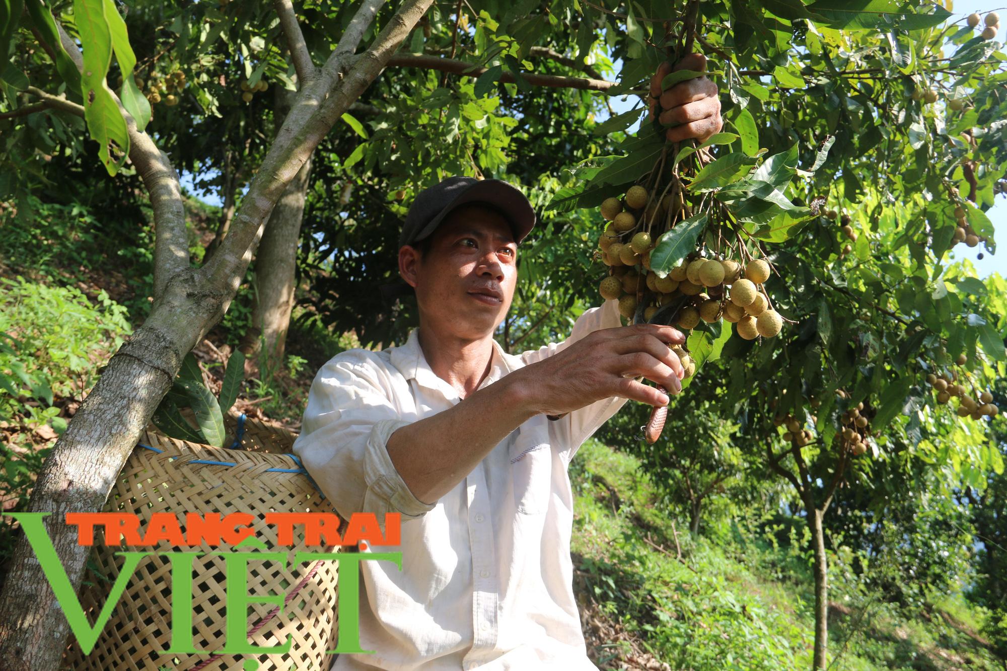 Yên Châu giúp bà con nông dân thoát nghèo và vươn lên làm giàu  - Ảnh 6.