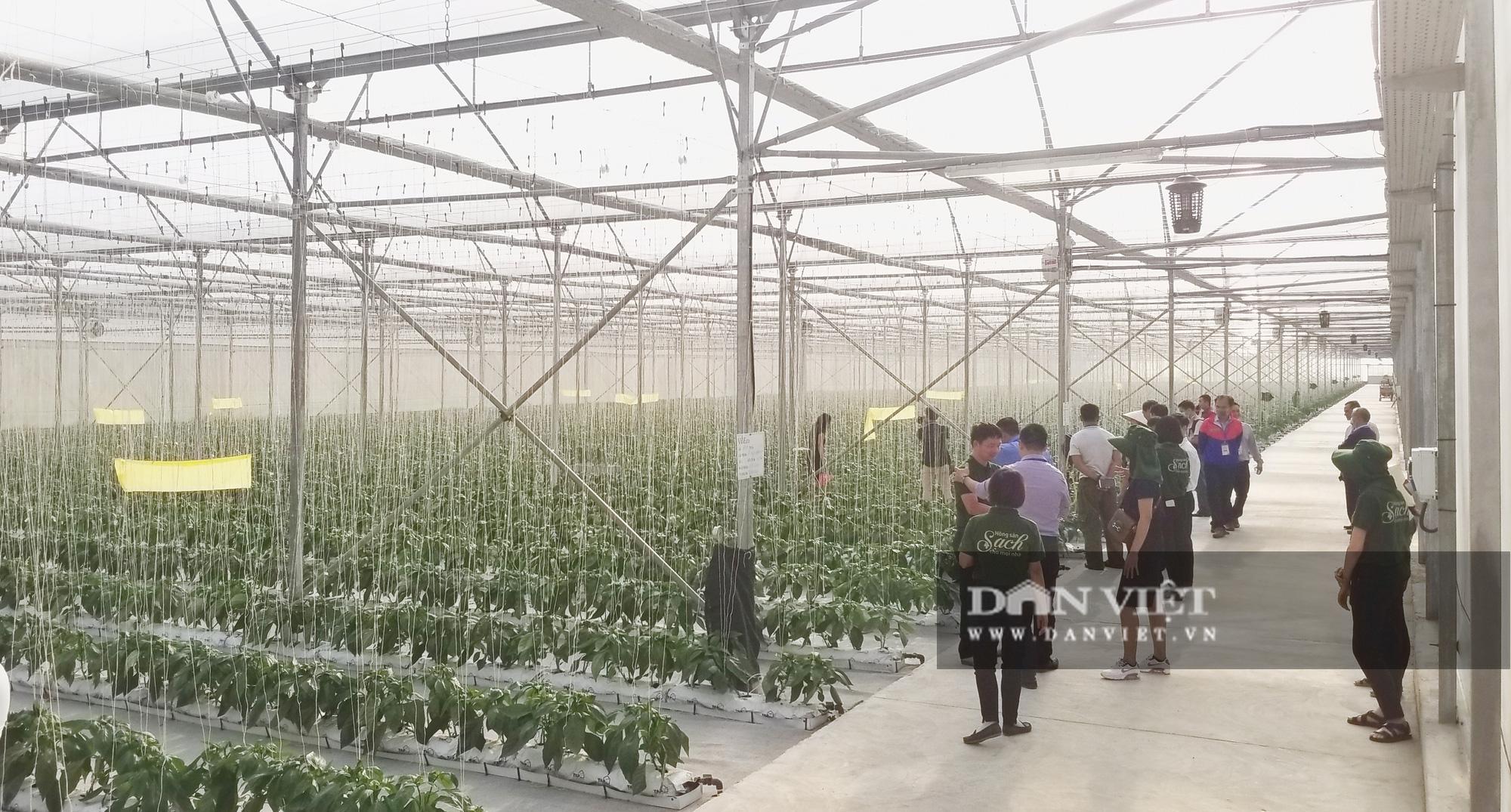 """Nông dân xuất sắc đã mắt ngắm hệ thống điều hòa khí hậu """"khổng lồ"""" để chăm sóc rau của VinEco - Ảnh 3."""
