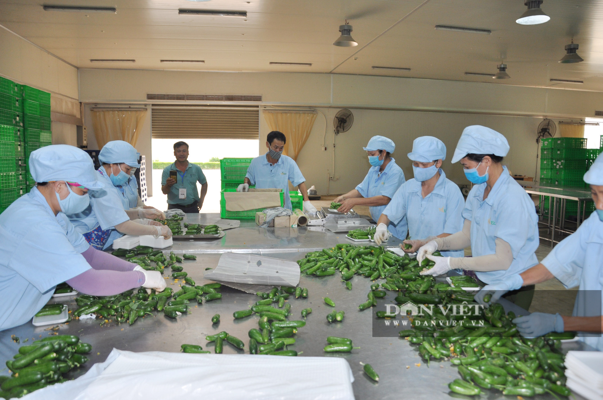 """Nông dân xuất sắc đã mắt ngắm hệ thống điều hòa khí hậu """"khổng lồ"""" để chăm sóc rau của VinEco - Ảnh 5."""