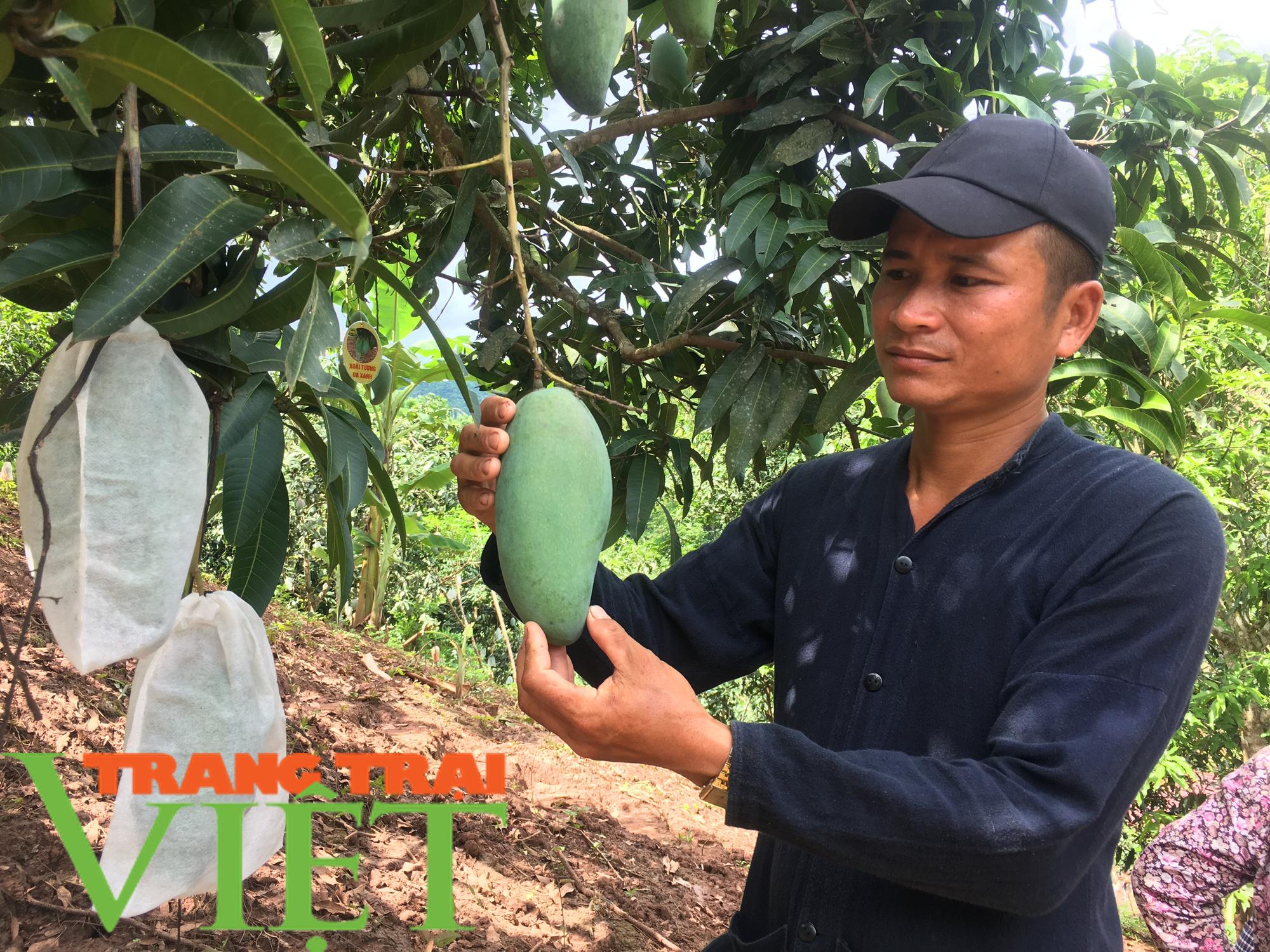 Yên Châu giúp bà con nông dân thoát nghèo và vươn lên làm giàu  - Ảnh 1.