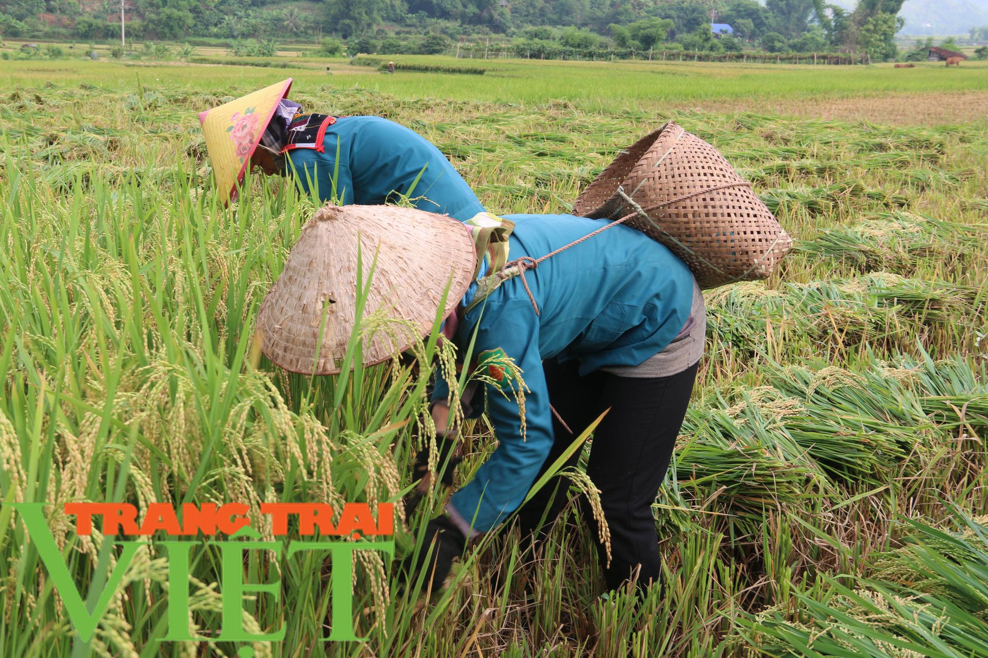 Cầm tay chỉ việc giúp nông dân phát triển sản xuất - Ảnh 5.