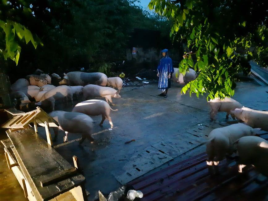 Quảng Trị: Người dân chạy lũ trong đêm, mong có cái ăn qua ngày - Ảnh 1.