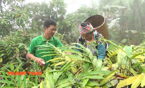 Mường Giàng nâng chất các tiêu chí nông thôn mới - Ảnh 3.