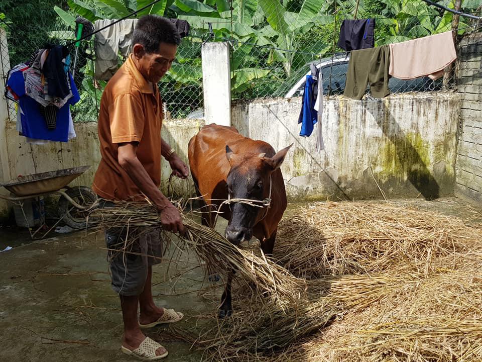 Điện Biên: Thông tin hỗ trợ bò gầy yếu là không chính xác - Ảnh 2.