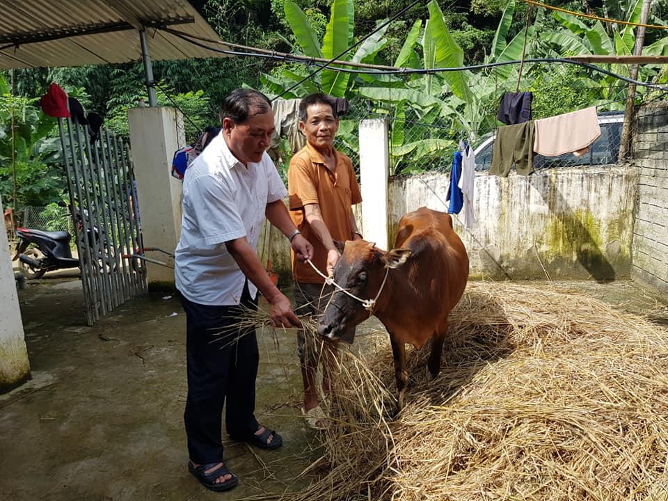 Điện Biên: Thông tin hỗ trợ bò gầy yếu là không chính xác - Ảnh 1.