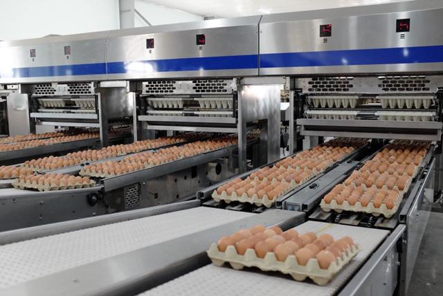 ' Đại gia Hòa Phát bán gần nửa triệu quả trứng gà sạch mỗi ngày, đứng số 1 miền Bắc - Ảnh 1.'