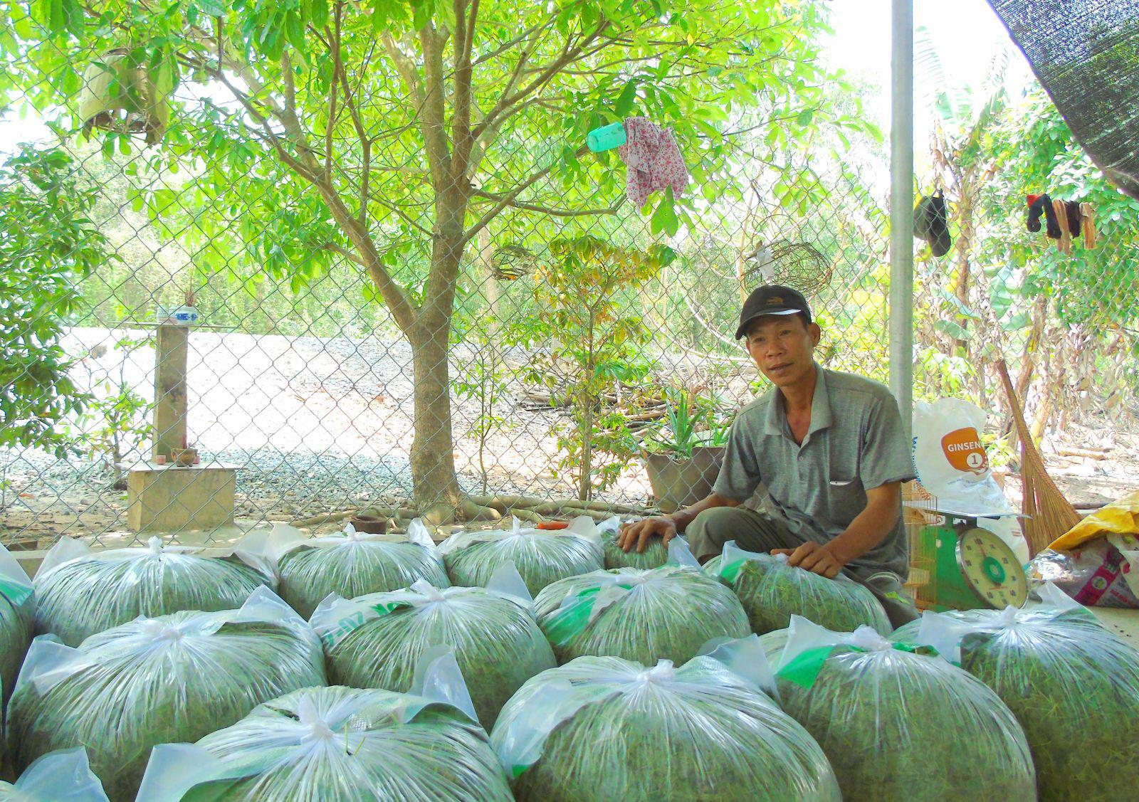Long An: Trồng thứ rau ăn mát, cắt lá bán 1 ngày đúi túi 1 triệu, gom hạt đem bán mỗi ký giá 2,5 triệu - Ảnh 1.