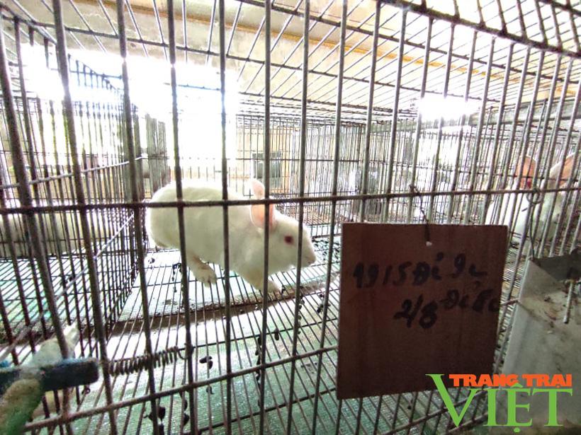 Anh Toàn nuôi thỏ kiểu này mà khiến người Nhật phải sang tận nơi mua về làm thuốc quý - Ảnh 5.