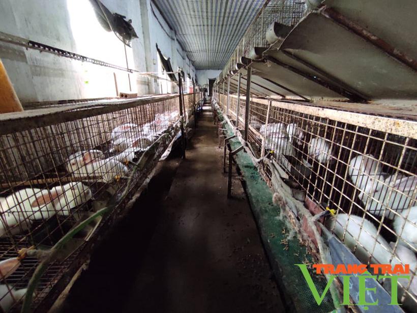 Anh Toàn nuôi thỏ kiểu này mà khiến người Nhật phải sang tận nơi mua về làm thuốc quý - Ảnh 6.