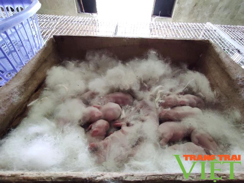 Anh Toàn nuôi thỏ kiểu này mà khiến người Nhật phải sang tận nơi mua về làm thuốc quý - Ảnh 7.