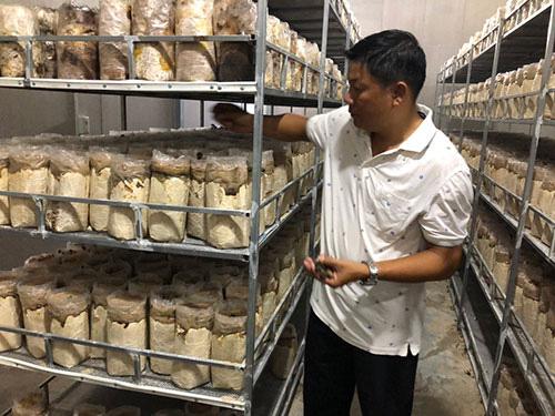 Trồng thứ nấm mới lạ công nghệ cao, bán tới 300 ngàn/ký, một ông nông dân tỉnh Bình Thuận bất ngờ trúng lớn - Ảnh 1.