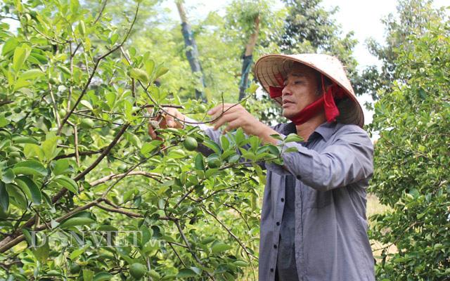 """Phải lòng """"cỗ máy nhả vàng"""" kiếm tiền tỷ, trồng la liệt các loại trái cây đặc sản thu nghìn USD - Ảnh 4."""