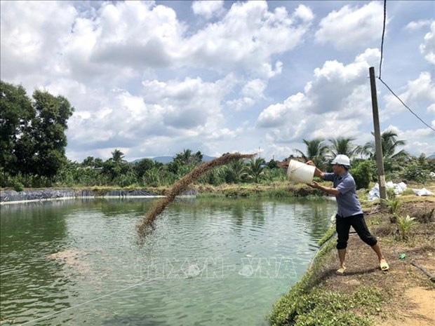 Cá rô phi Philipines khác rô phi thường điểm gì mà ông nông dân tỉnh Bà Rịa-Vũng Tàu bắt 300 tấn, thu 9 tỷ? - Ảnh 1.