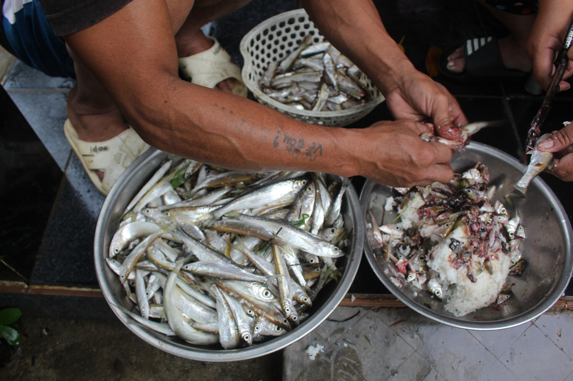 Kể chuyện làng: Cá mương Hòa Phú cá mú Sơn Trà - Ảnh 2.