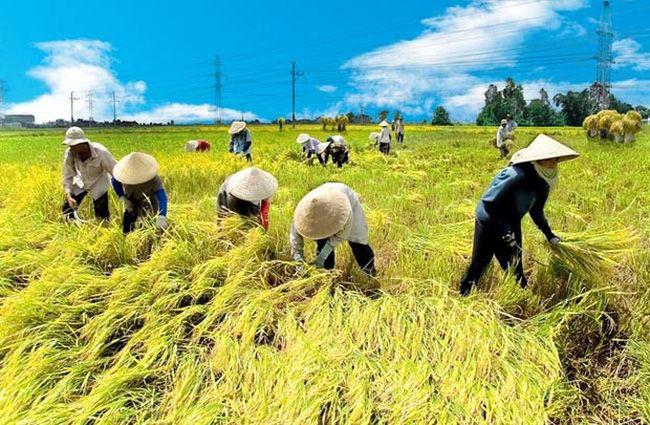 Đề xuất hạng đất tính thuế sử dụng đất nông nghiệp từ 2021 - 2025 - Ảnh 1.