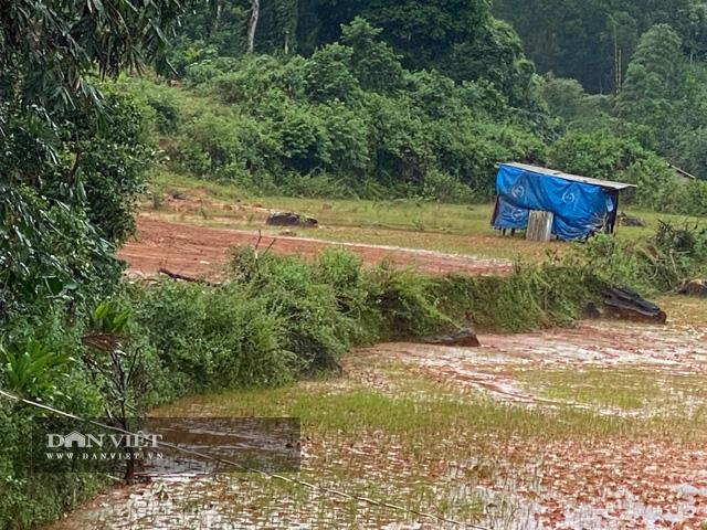 """Quảng Ngãi: Dự án khẩn 77 tỷ """"phủ"""" đất sỏi xuống đầy ruộng lúa của dân  - Ảnh 4."""