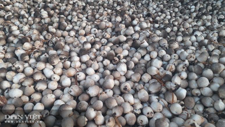 Trồng nấm rơm thương phẩm, anh nông dân Thái Nguyên bỏ túi vài trăm triệu mỗi năm - Ảnh 6.