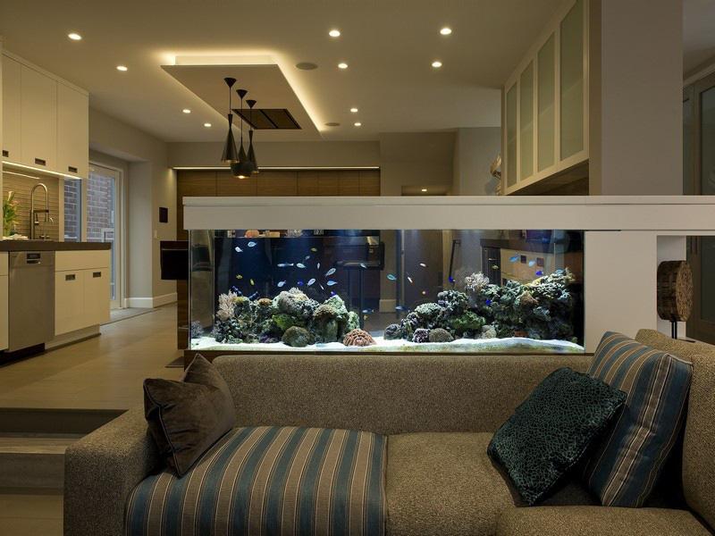 Biết 5 điều này khi nuôi cá cảnh để đón tài lộc vào nhà không xuể - Ảnh 3.