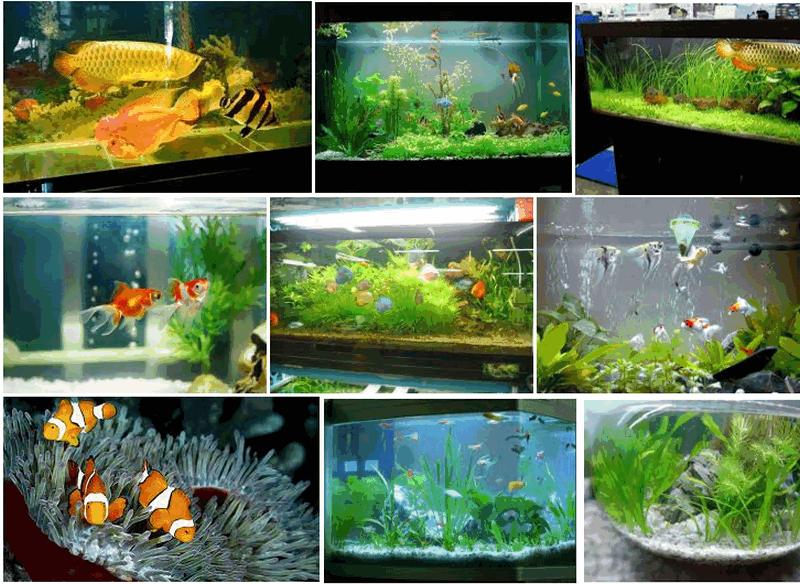Biết 5 điều này khi nuôi cá cảnh để đón tài lộc vào nhà không xuể - Ảnh 1.