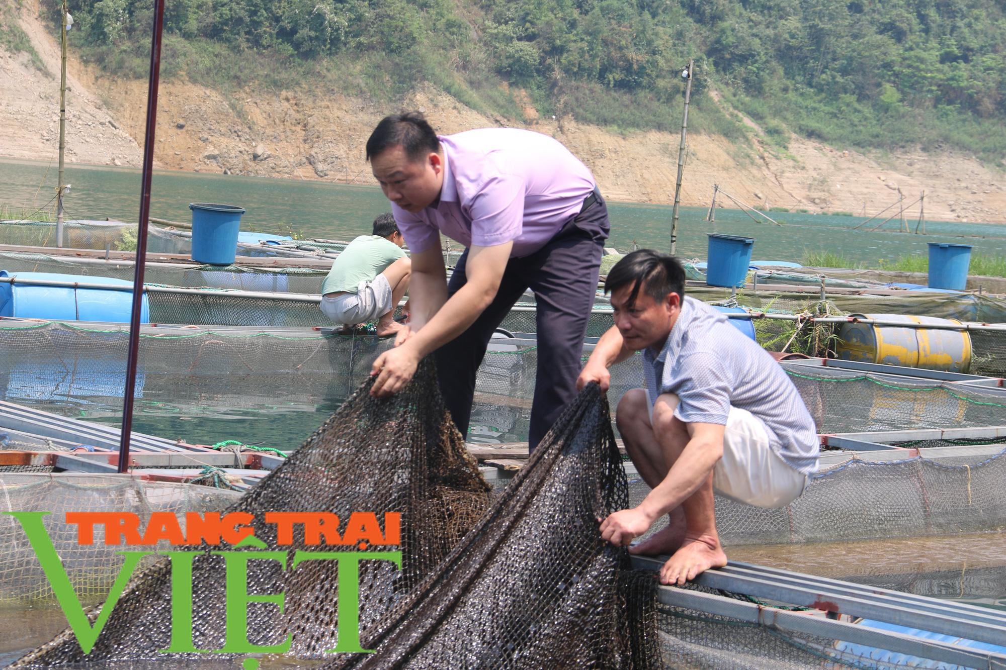 Hòa Bình: Phát huy tiềm năng thế mạnh nuôi cá lồng trên vùng lòng hồ - Ảnh 3.