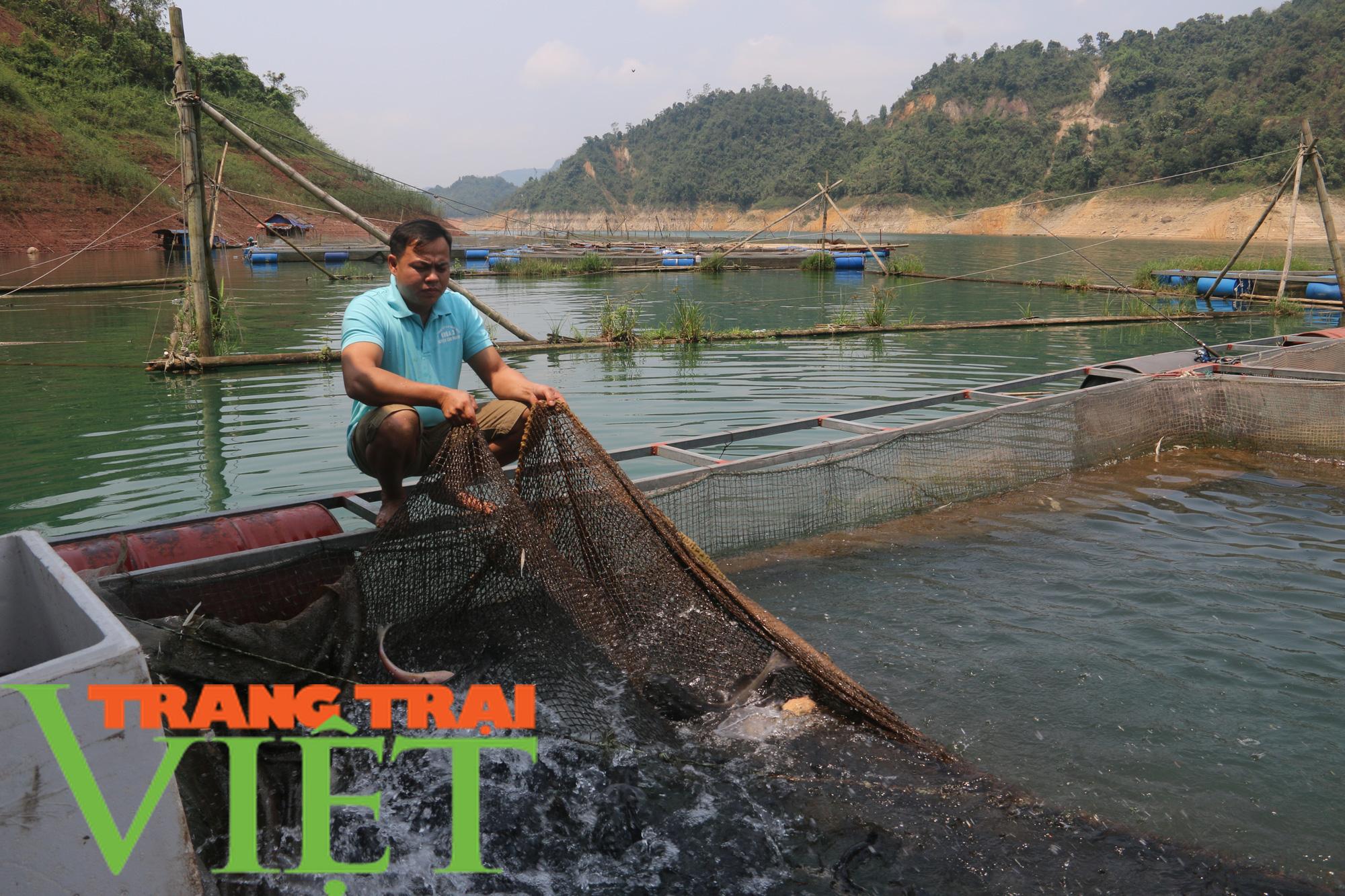 Hòa Bình: Phát huy tiềm năng thế mạnh nuôi cá lồng trên vùng lòng hồ - Ảnh 1.