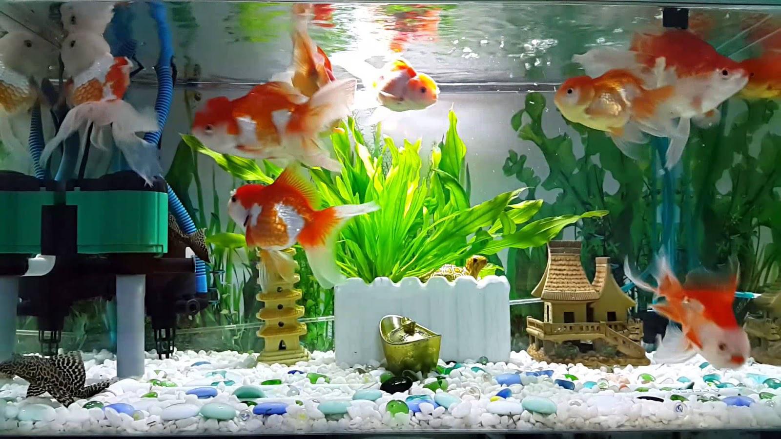 Biết 5 điều này khi nuôi cá cảnh để đón tài lộc vào nhà không xuể - Ảnh 2.