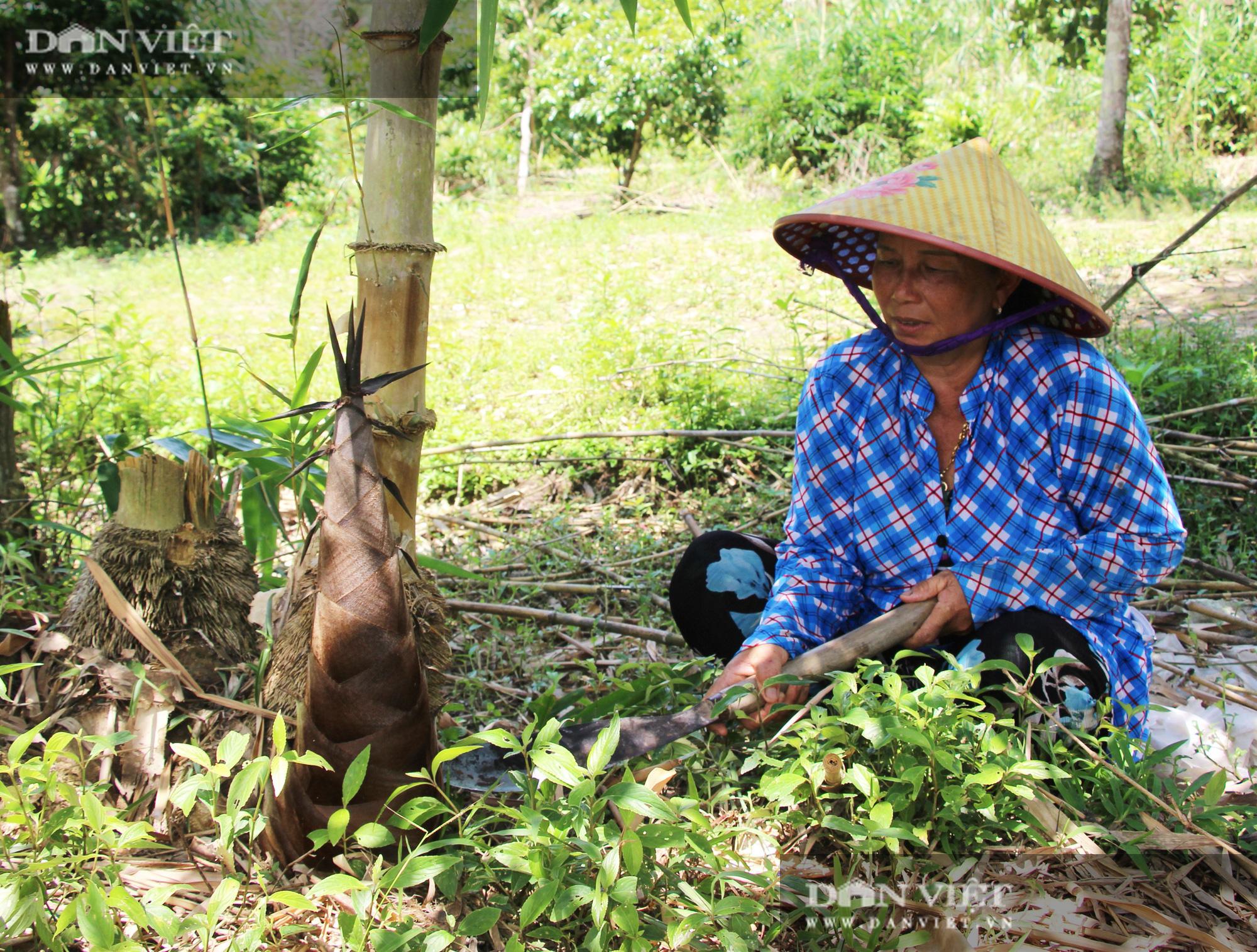 Thu lãi trăm triệu đồng/năm nhờ trồng loài cây bán không bỏ thứ gì - Ảnh 1.