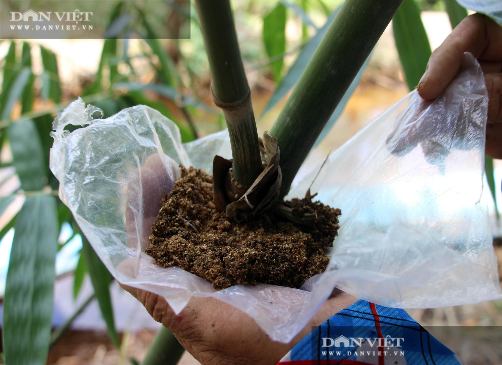 Thu lãi trăm triệu đồng/năm nhờ trồng loài cây bán không bỏ thứ gì - Ảnh 4.