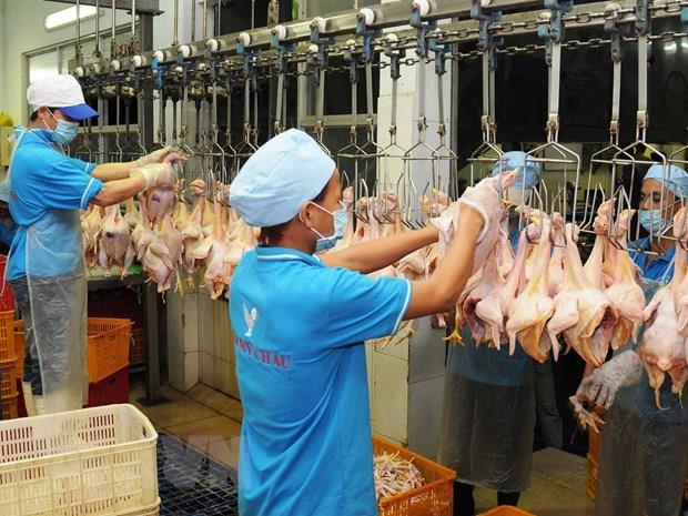 Giá gia cầm hôm nay 18/10: Chuyên gia bày cách cứu người nuôi gà, vịt - Ảnh 1.