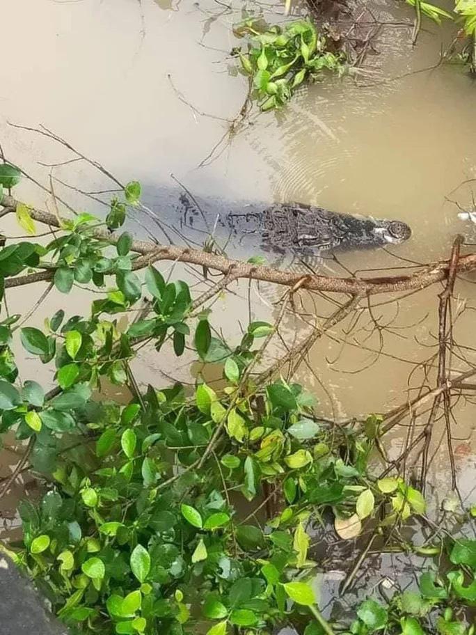 Đồng Tháp: Con cá sấu khủng dài 1,5m bơi trên sông ngay bến đò, dân tình hoảng hốt - Ảnh 1.